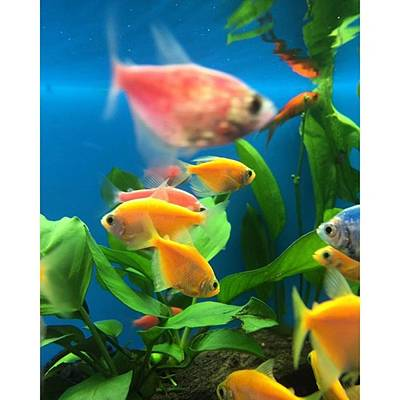 Animals Photograph - Fish Tank With Colorful Fish by Juan Silva