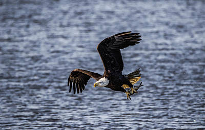 Photograph - Fish To Go by Ray Congrove