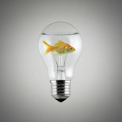 Light Bulb Wall Art - Digital Art - Fish by Zoltan Toth