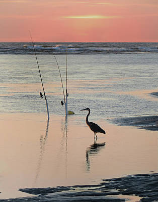 Photograph - Fisherman Heron by Deborah Smith
