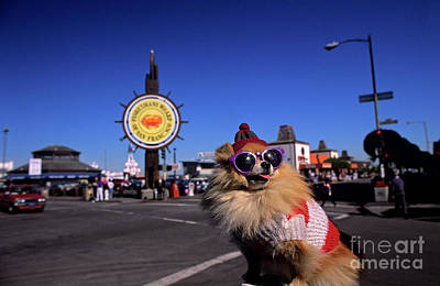 Photograph - Fisherman's Terminal With Dog With Sunglasses  by Jim Corwin