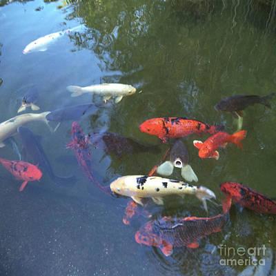 Fishes Huntington Gardens California Art Print