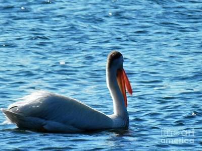 Photograph - Fishin For My Breakfast by L Cecka