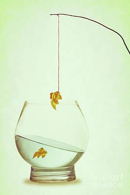 Goldfish Photograph - Fishing by Amanda Elwell