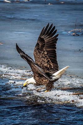 Bird Watcher Photograph - Fishing Bald Eagle by Paul Freidlund