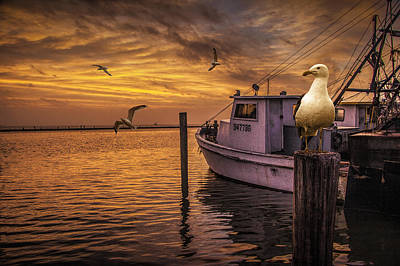 Flying Gull Photograph - Fishing Boat And Gulls At Sunrise by Randall Nyhof