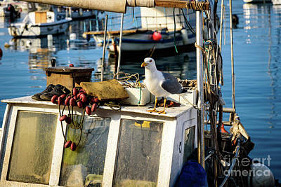 Photograph - Fishing Boat Captain Seagull - Rovinj, Croatia by Global Light Photography - Nicole Leffer
