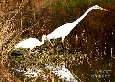 Photograph - Fishing Buddies by Carol Groenen