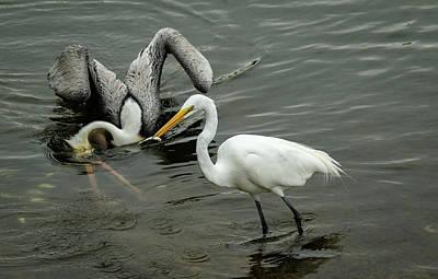 Photograph - Fishing Buddies by Les Greenwood