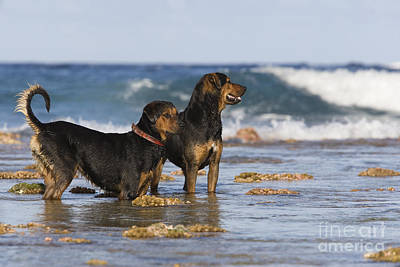 Fishing Dogs Of Polynesia Art Print by Jean-Louis Klein & Marie-Luce Hubert