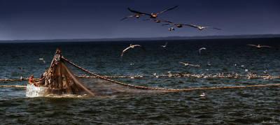 Photograph - Fishing For Menhaden On The Chesapeake Bay by Glenn Gemmell