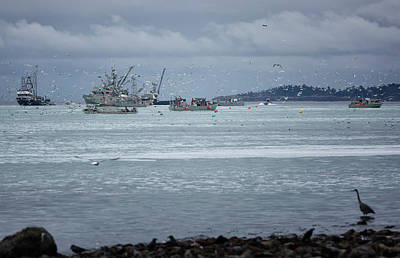 Photograph - Fishing Frenzy 2 by Randy Hall