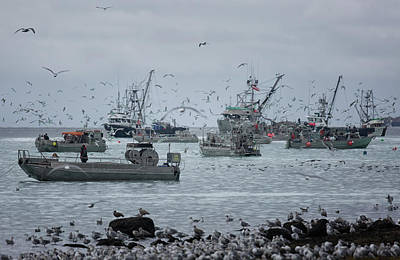 Photograph - Fishing Frenzy by Randy Hall