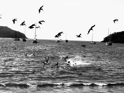 Photograph - Fishing Gulls by Rosanne Licciardi