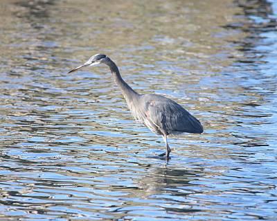 Photograph - Fishing In November by Karen Silvestri