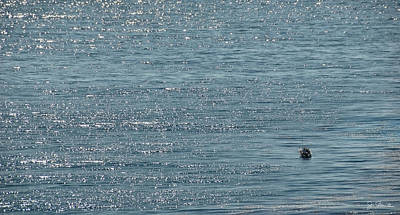Photograph - Fishing In The Ocean Off Palos Verdes by Joe Bonita