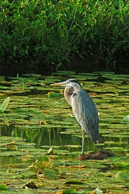 Photograph - Fishing On One Leg. by Robert Anschutz