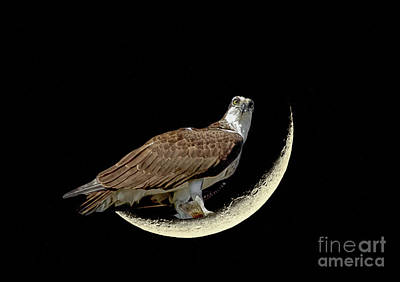 Photograph - Fishing On The Moon by Dale Powell