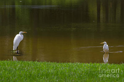 Photograph - Fishing Partners by Dale Powell