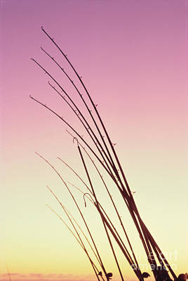 Photograph - Fishing Poles by William Waterfall - Printscapes