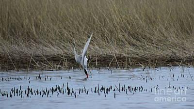 Photograph - Fishing Tern by Erick Schmidt