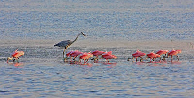 Photograph - Fishing The Flats by HH Photography of Florida