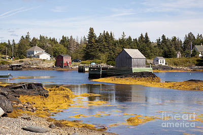 Photograph - Fishing Village In Nova Scotia by Nick Jene