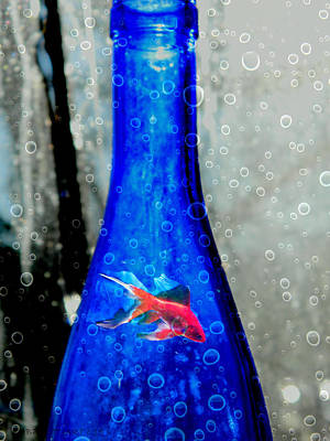 Photograph - Fishy Bottle by Kathy Barney