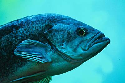 Photograph - Fishy Profile by Eric Tressler