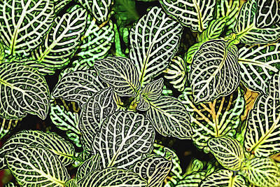 Photograph - Fittonia Airbrushed by Patti Whitten