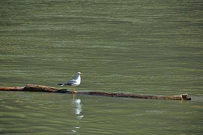 Photograph - Tiber River Resident by JAMART Photography
