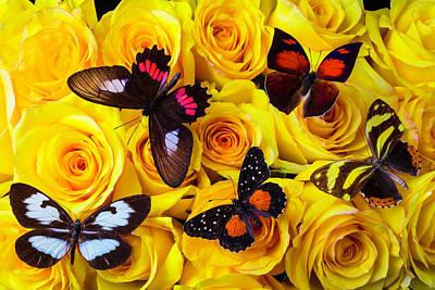 Beautiful Butterfly Photograph - Five Beautiful Butterflies  by Garry Gay