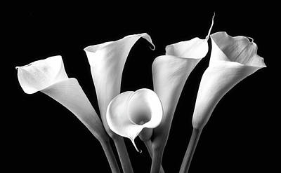 Calla Lily Wall Art - Photograph - Five Black And White Calla Lilies by Garry Gay