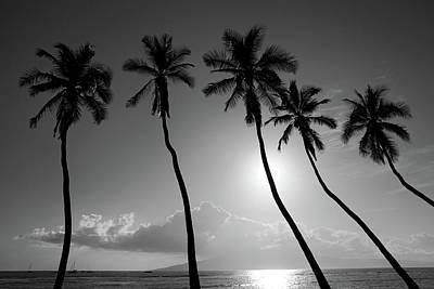 Five Coconut Palms Print by Pierre Leclerc Photography