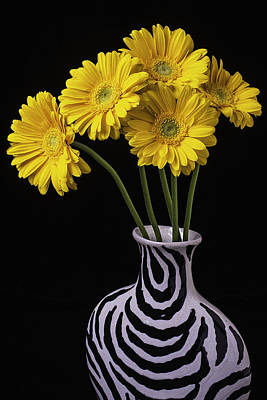 Daisy Photograph - Five Daisies In Striped Vase by Garry Gay