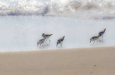 Photograph - Five Feeding Sandpipers by Allan Levin