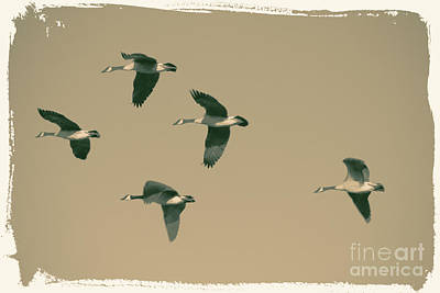 Digital Art - Five Geese Fly Taupe by Donna Munro