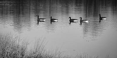 Photograph - Five Geese On November Morning - B/w by Greg Jackson