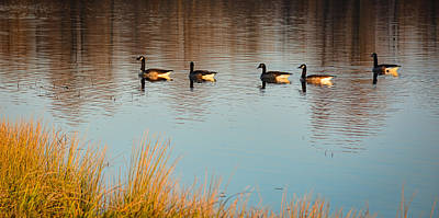 Photograph - Five Geese On November Morning by Greg Jackson