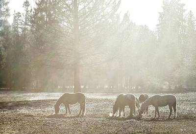 Photograph - Five Horses In The Mist by Bill Linn