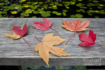 Photograph - Five Leaves On The Bridge  by Maria Janicki