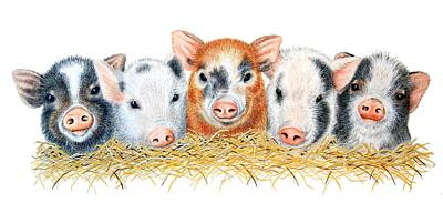 Pig Drawing - Five Little Pigs by Sandra Moore