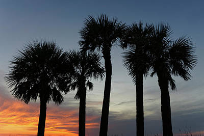 Photograph - Five Palms, St. Pete's Beach by Steve Gravano