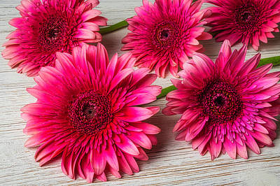 Photograph - Five Pink Daises by Garry Gay