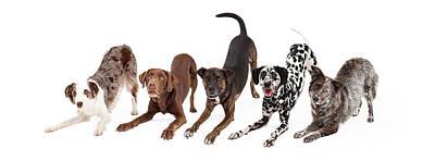 Five Playful Dogs Bowing Art Print by Susan Schmitz