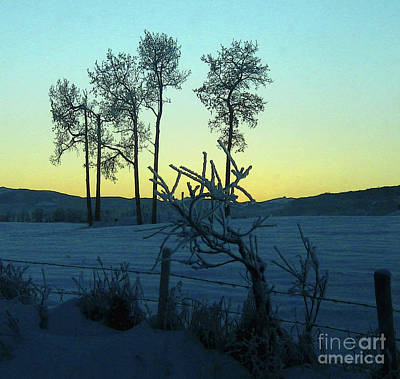 Photograph - Five Poplars, Frozen by Anne Havard