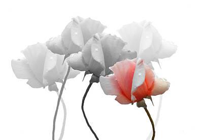 Five Roses Art Print