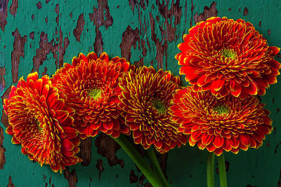 Gerbera Daisy Photograph - Five Rustic Mums by Garry Gay