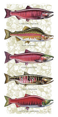 Jon Q Wright Painting - Five Salmon Species  by JQ Licensing