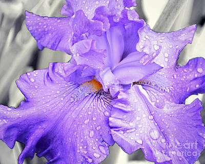 Photograph - Five Star General Iris by Kathy M Krause